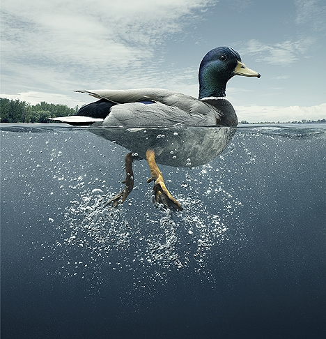 DuckER